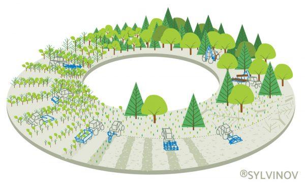 Représentation du cycle de la forêt